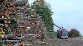 Een dichtere mening van de uiterst kleine bomen die worden gesneden stock video