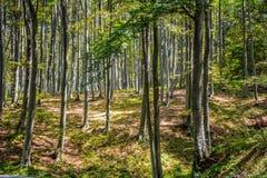 Een diep bos stock afbeeldingen