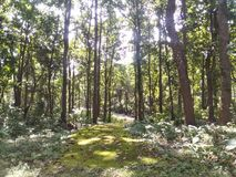 In een diep bos Stock Fotografie
