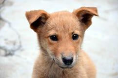 Een dierlijk puppy royalty-vrije stock afbeeldingen