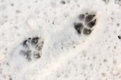 Een dierlijk spoor in de sneeuw Stock Foto