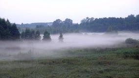 Een dikke mist sluipt de schemering in bos binnen stock footage