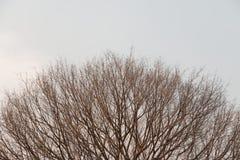 Een dode boom Stock Foto