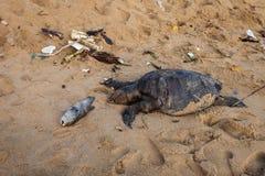 Een dode schildpad op het strand Stock Foto