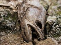 Een dode vis Stock Afbeelding