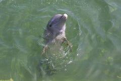 Een dolfijn Stock Afbeeldingen
