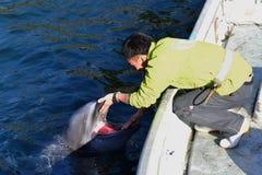 Een dolfijntrainer spreekt aan de dolfijn in Japan Kagoshima stock afbeelding