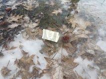 Een dollarrekening op glad dik ijs met bruine bladeren in de winter stock afbeelding