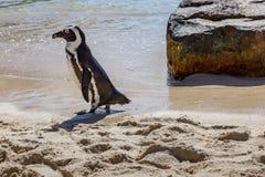 Een Domoorpinguïn stock afbeelding