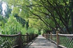 Een doorgang in het bosje royalty-vrije stock afbeeldingen