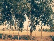 Een dorp van West-Bengalen Stock Afbeeldingen