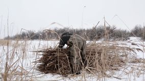Een dorpsbewoner op een bevroren meer op een koude de winterdag verzamelt droog riet in hooibergen en neemt hen huis om het huis  stock footage