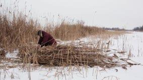 Een dorpsbewoner op een bevroren meer op een koude de winterdag verzamelt droog riet in hooibergen en neemt hen huis om het huis  stock videobeelden