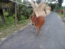 Een dorpsscène van Bangladesh Stock Afbeeldingen