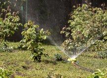 Een draagbare sproeier in de tuin gaf gazongras en struiken water Stock Afbeeldingen