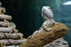 Een draak van rankin rust op een tak kijkend edel royalty-vrije stock afbeeldingen