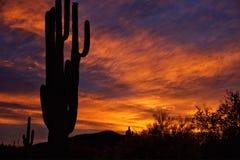 Een dramatische zonsopgang in Sonoran-woestijn Arizona Stock Fotografie