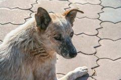 Een droevige dakloze hond op de waterkant Stock Foto
