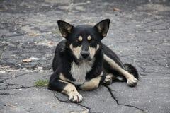 Een droevige hond Stock Foto's