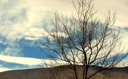 Een droge boom Stock Afbeeldingen