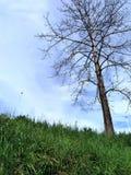 Een droge boom Royalty-vrije Stock Afbeeldingen