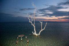 Een droge boom in het Meer van Sevan Royalty-vrije Stock Fotografie