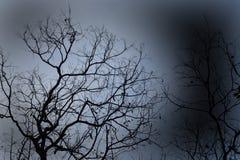 Een droge boom in nadruk stock fotografie