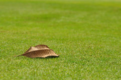 Een droog blad op green Royalty-vrije Stock Afbeeldingen