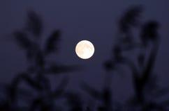 Een duidelijke Maan Stock Foto's