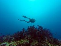 Een duiker Stock Fotografie