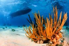 Een duikvluchtboot over een tropisch koraalrif stock foto's