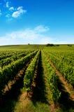 Een Duitse wijngaard dichtbij rhe Royalty-vrije Stock Fotografie