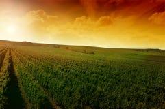 Een Duitse wijngaard dichtbij rhe Stock Fotografie