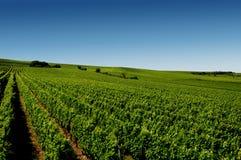 Een Duitse wijngaard dichtbij rhe Royalty-vrije Stock Afbeelding