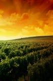 Een Duitse wijngaard dichtbij rhe Stock Afbeeldingen