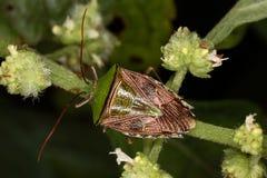 Een echt insect zonder te verwarren  Royalty-vrije Stock Foto