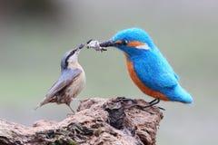 Een echte vogel en een gevulde vogel grappige beelden Stock Foto