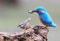 Een echte vogel en een gevulde vogel grappige beelden Royalty-vrije Stock Fotografie