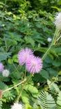 Een eenvoudige bloem Stock Foto's