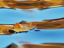 Een eenzaam blad op het water in de weerspiegelde hemel royalty-vrije stock afbeelding