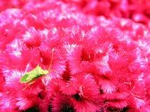 Een eenzaam insect stock foto