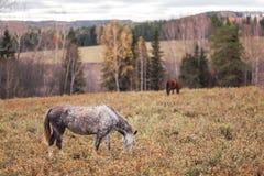 Een eenzaam paard royalty-vrije stock afbeelding