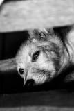 Een eenzaam puppy royalty-vrije stock foto's