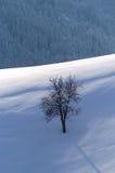 Een eenzame appelboom Royalty-vrije Stock Foto's