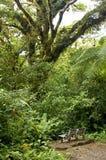 Een eenzame bank zit onder het weelderige, groene gebladerte van Monteverde-Wolk Forest Reserve in Costa Rica royalty-vrije stock afbeeldingen