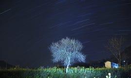 Een eenzame boom. Royalty-vrije Stock Afbeeldingen