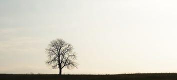 Een eenzame boom Stock Afbeeldingen