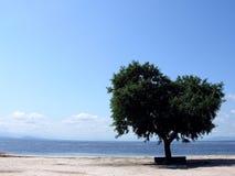Een eenzame boom Royalty-vrije Stock Afbeelding