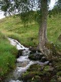 Een eenzame boom die zich bij een kreek bevinden die Groene Heuvels bij Glenshee-Vallei, Grampian-Bergen, Schotland reduceren royalty-vrije stock afbeelding