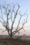 Een eenzame boom die zich in het midden van het strand, Thailand bevinden Stock Foto's